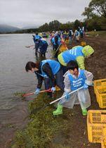 猪苗代湖畔の水草回収に励むトヨタ関連社員や家族ら