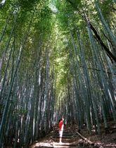女山史跡森林公園の「神宿る竹林」。覆い尽くすササの隙間から木漏れ日が注ぐ