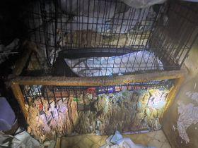 動物愛護団体が女宅に立ち入った際の室内。汚物やゴミが堆積し、悪臭が漂っていた(6月、京都府八幡市)=神戸ナナプロジェクト提供