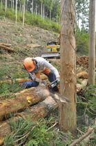 伐採が進む高知市の市有林(同市土佐山東川)