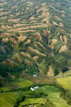山のいたるところで土砂崩れが発生した北海道厚真町=9月6日