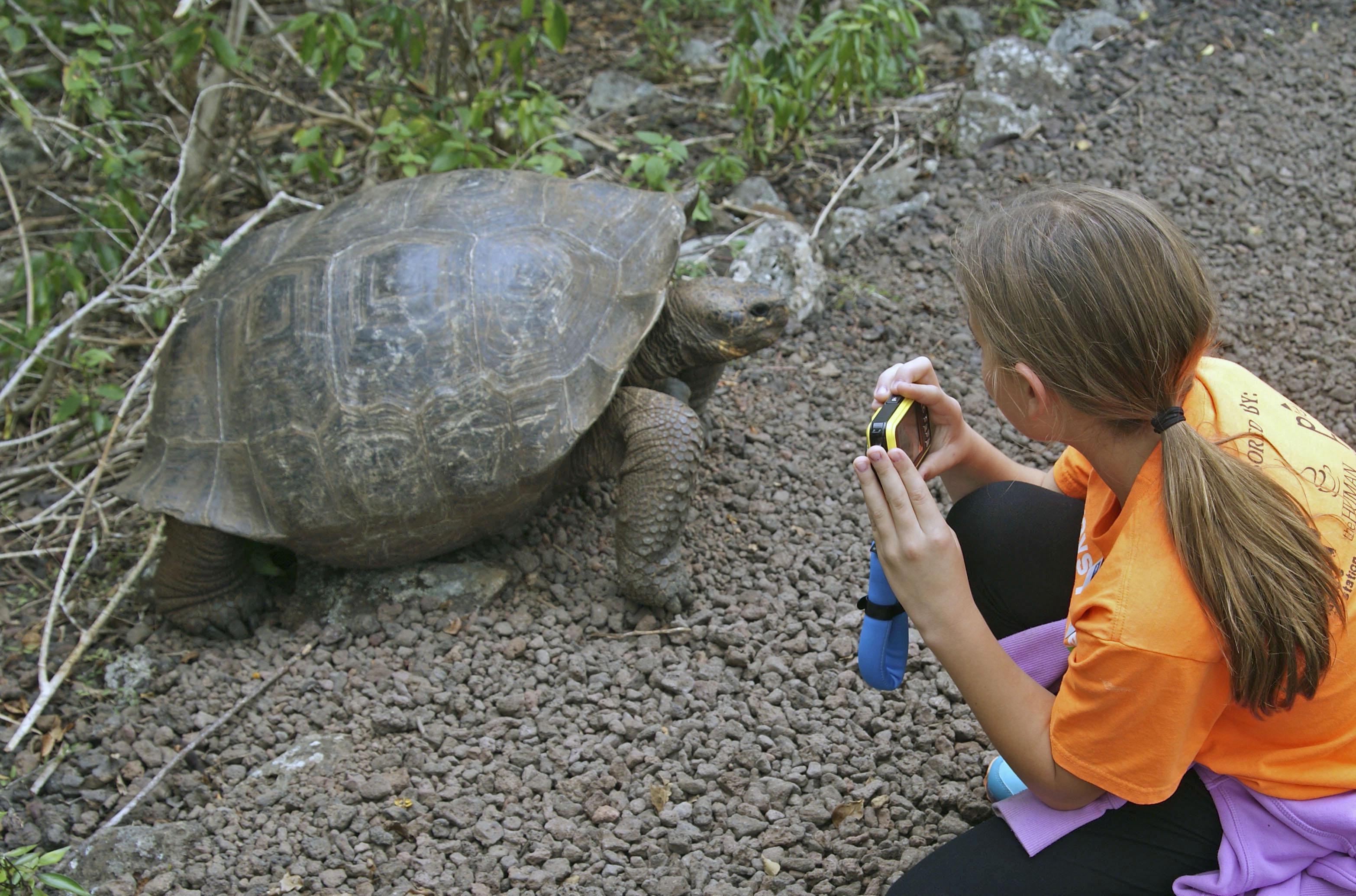 ガラパゴス諸島サンクリストバル島では、数が増えつつあるゾウガメを観光客が見られるようになってきた。一定の距離を保つルールはあるが、向こうから人に近づいてくることもある=11月(共同)