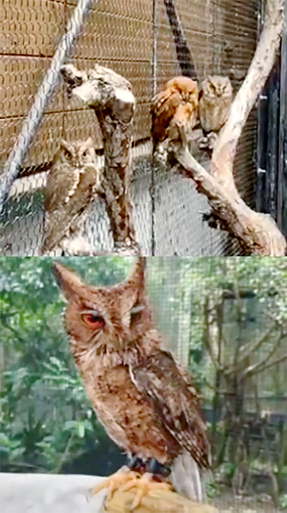 旭山動物園と沖縄こどもの国が「インスタグラム」を使い、生配信した動画