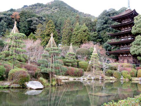 国宝瑠璃光寺五重塔の美しさを一層引き立てている雪つり=山口市
