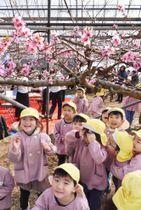 「ハウス桃宴」の開園式で桃の花見を楽しむ子どもたち=14日午前、山梨県笛吹市