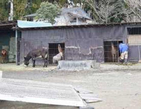 ラマが飼育されている草食動物エリア=12日午前、那須町高久乙