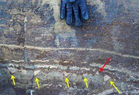 NASAのチームが調べたグリーンランドの岩石。下向きのドーム状の構造(黄色の矢印)と上向きの構造(赤色の矢印)が混在している(NASA提供)