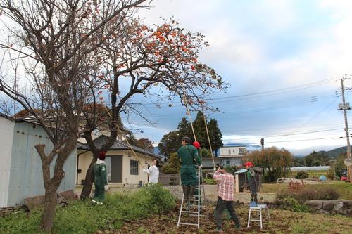 秋の柿もぎの風景