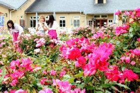 見頃を迎える多彩なバラ=南あわじ市八木養宜上、淡路ファームパーク・イングランドの丘