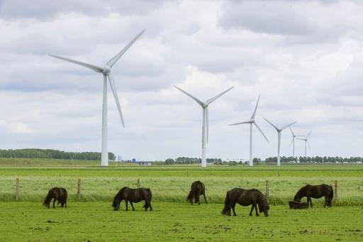 アムステルダム郊外の風力発電装置。ポニーがのどかに草を食べていた=19年6月(共同)