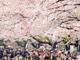 東京・上野公園=2017年4月8日