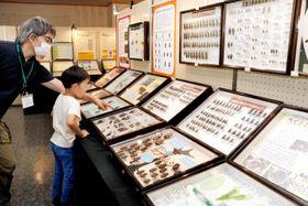 石鎚山系に生息するクワガタムシの標本を見つめる子ども
