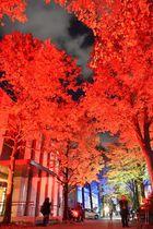 鮮やかにライトアップされた愛媛大の「メイプルプロムナード」=19日夜、松山市文京町