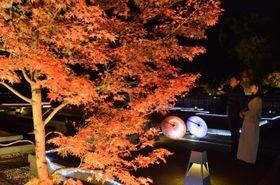 幻想的にライトアップされた二之丸史跡庭園=14日午後6時20分ごろ、松山市丸之内
