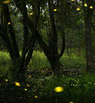 点滅を繰り返し、浮かび上がったヒメボタルの光=21日夜、大阪府吹田市(午後7時41分から約20秒おきに撮影した26枚の写真を合成)