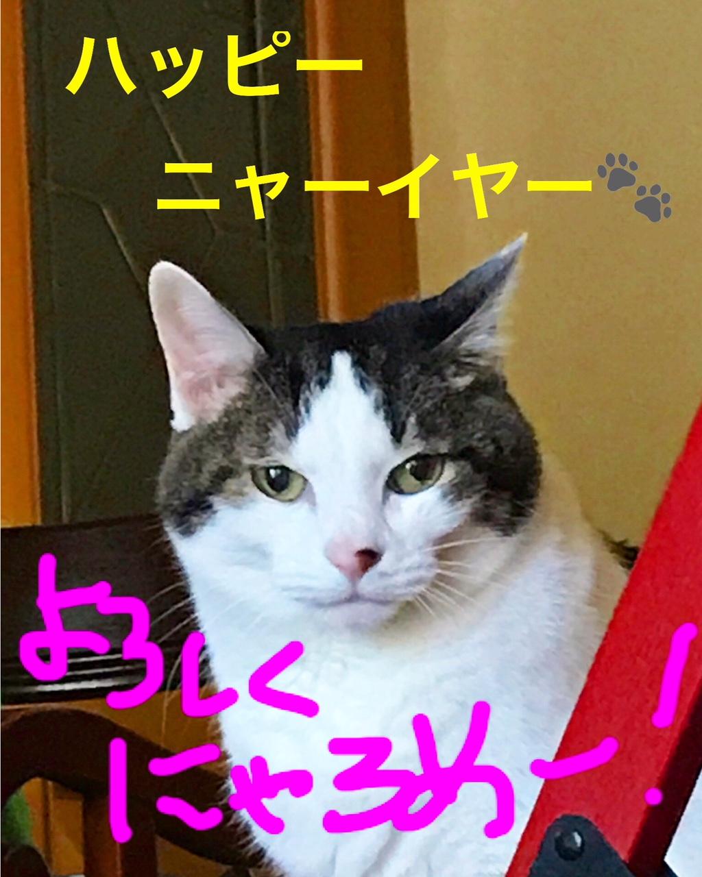 戌年に便乗猫もよろしくニャロメ