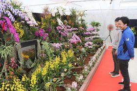 多様な洋ランが咲き誇る展覧会会場=新潟市西蒲区