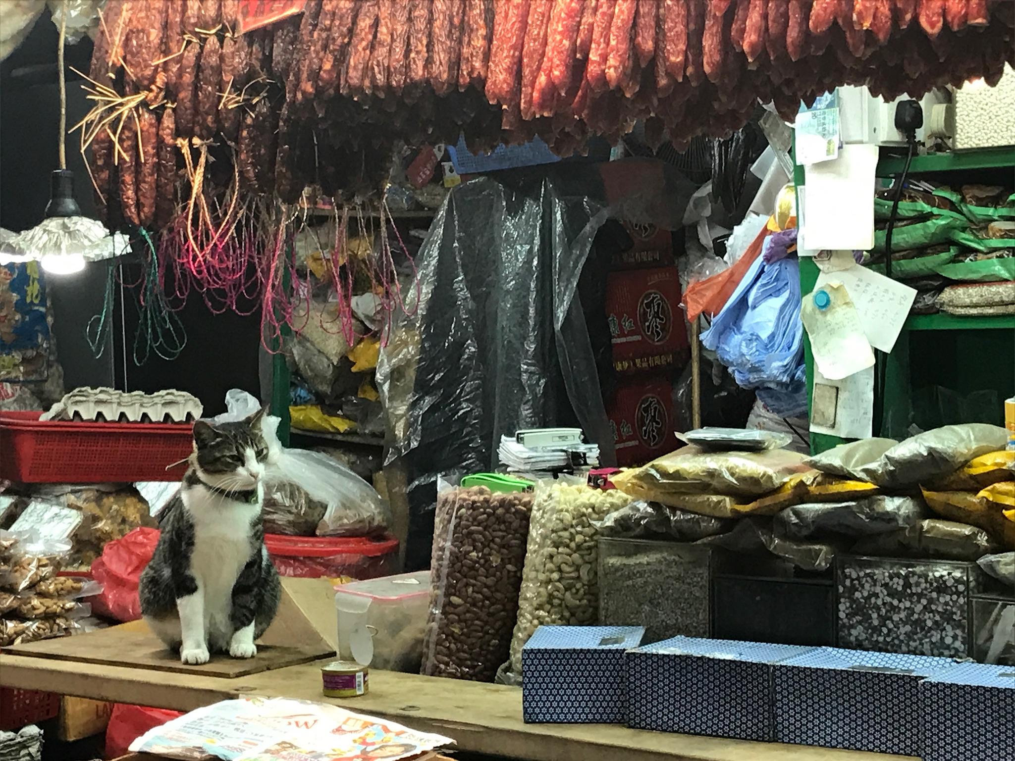 店番猫遭遇率が高い香港