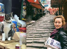 猫も私にも香港の朝がくる