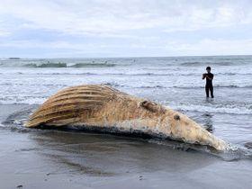 材木座海岸に打ち上げられたクジラの死骸=午後5時50分ごろ