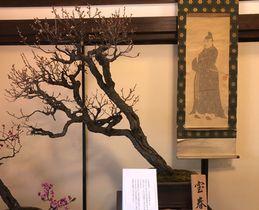 大阪天満宮で展示されている長浜の盆梅=長浜観光協会提供