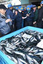 A棟サバの入札用サンプルを品定めする買受人ら=22日午後、八戸港第1魚市場