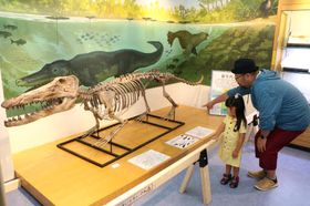 シロイルカの祖先であるアンブロケタスの骨格標本のレプリカを見る来場者