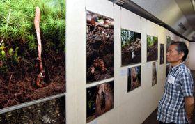 昆虫から生えたキノコの写真が並ぶ企画展