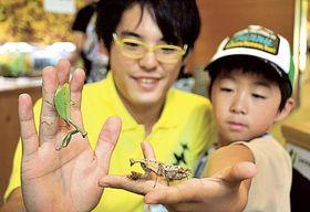 国内外の珍しいカマキリが並ぶ展示会=磐田市竜洋昆虫自然観察公園