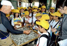 イリコの加工場で乾燥されたイワシを間近で見学する児童たち=香川県観音寺市伊吹町