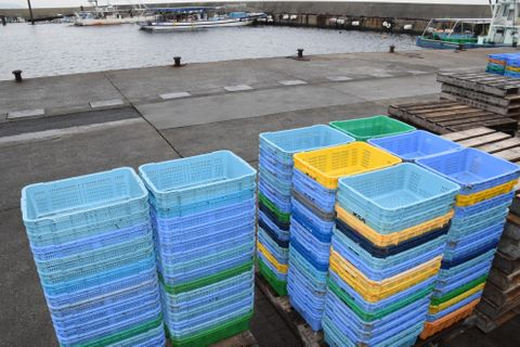 瀬戸内イカナゴ漁解禁も収穫ゼロ