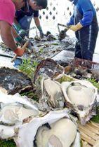 殻の洗浄など岩ガキの出荷準備に追われるいかだ上の作業場=長島町諸浦