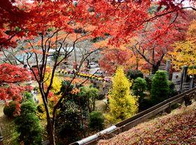 色鮮やかな紅葉で彩られた「花と歴史の郷 蛇の鼻」の庭園内