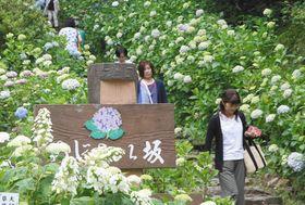 観光客でにぎわう太平山のあじさい坂=栃木市で