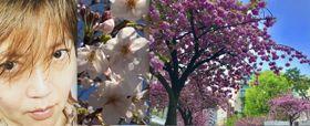 今年の桜はなんとなく忙しい