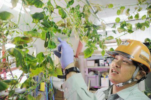 昭和基地で行っている水耕栽培について説明する第60次南極観測隊の倉島浩章さん=1月(共同)