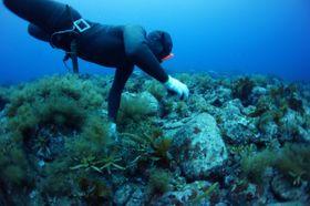 文化審議会が重要無形民俗文化財に指定するよう答申した石川県輪島市の「輪島の海女漁の技術」