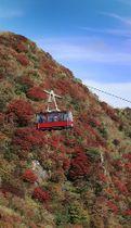 赤や黄に色づく妙見岳の紅葉。青空とのコントラストが映える=22日午後、長崎県雲仙市