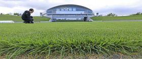 開業以来、初めて芝を更新した札幌ドームのサッカー場(北波智史撮影)