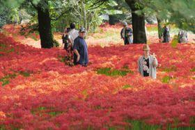 見頃を迎えた彼岸花。真っ赤なじゅうたんが広がる=18日、竹田市戸上