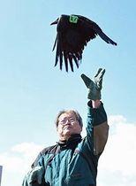 羽の付け根にタグをつけたカラスを放鳥する東教授