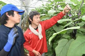 インターンシップで坂本一さんからナスの芽摘みの助言を受けた県立農業大学生(左)