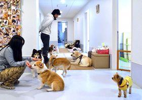 老犬ホーム協会に加盟し、「基準」以上のサービスを提供する施設。預けられた犬は室内や廊下を自由に動き、飼い主との面会もできる(京都市伏見区・老犬介護ホームろうたす)
