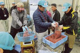 入札が中止となったサクラエビ春漁の競り。買い取り希望の仲買人が分け合い購入した=17日午前、静岡市清水区の由比漁港