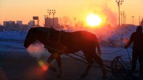 厳寒の朝 ばん馬の調教