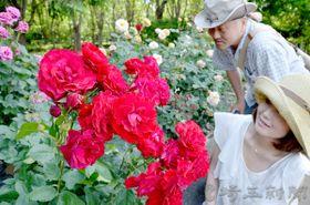 園内に甘い香りを漂わせるバラ=狭山市柏原の都市緑化植物園