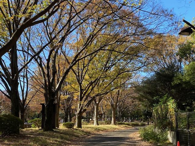本格的な春の訪れを待つ東京・駒沢オリンピック公園