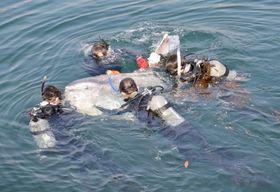 オレンジ色の小型記録計を付け、飼育員に海へ誘導されるマンボウ=鹿児島市本港新町のかごしま水族館