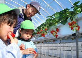 イチゴ園の開園に先立ち、招いた園児たちを見守る山中さん(滋賀県近江八幡市大中町・ボンガーデン)