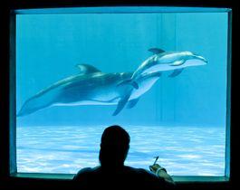 「鴨川シーワールド」で人工繁殖により生まれたカマイルカの赤ちゃん。左は母ディアナ=25日、千葉県鴨川市